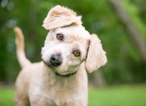 Causes & Types of Canine Dermatitis | Wild Thing Pets