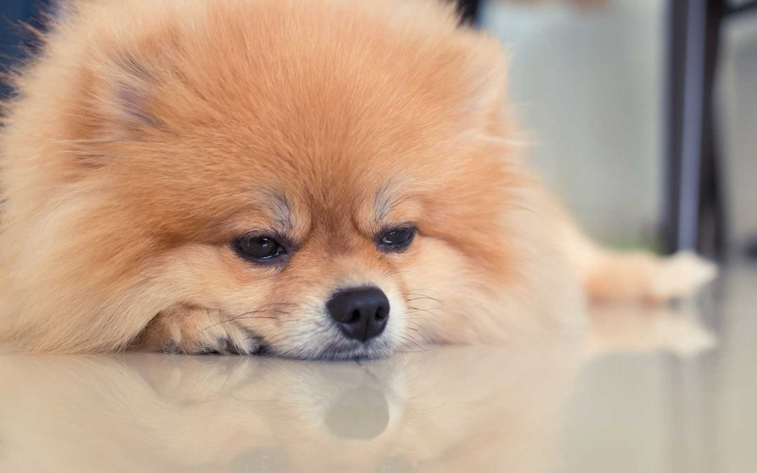 CBD for Nausea Treatment in Dogs and Cats
