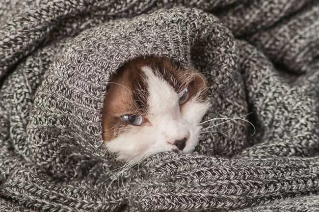CBD for Nausea Treatment in Cats