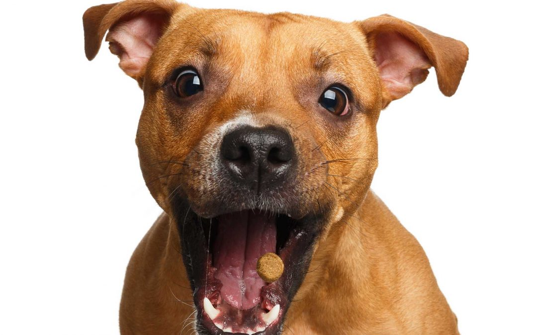 CBD Dog Treats: What Are the Pros & Cons