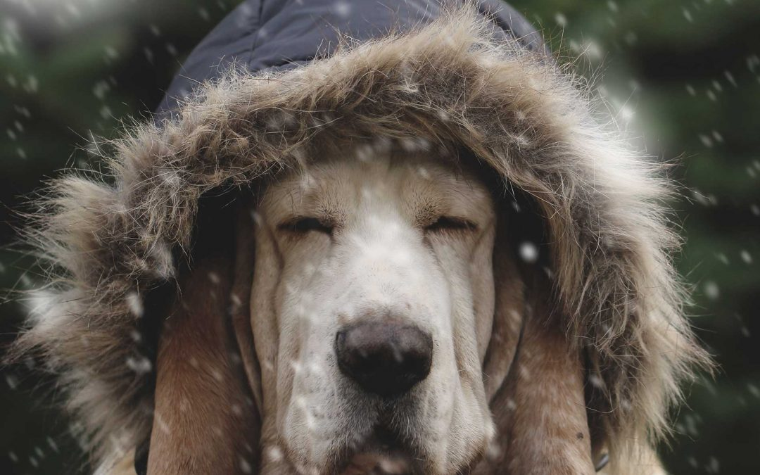 Cold Weather Pet Safety Tips from Ears to Paws