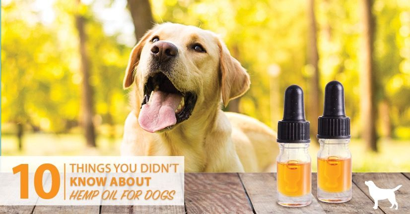 10 Reasons To Use Full Spectrum Hemp Oil For Dogs