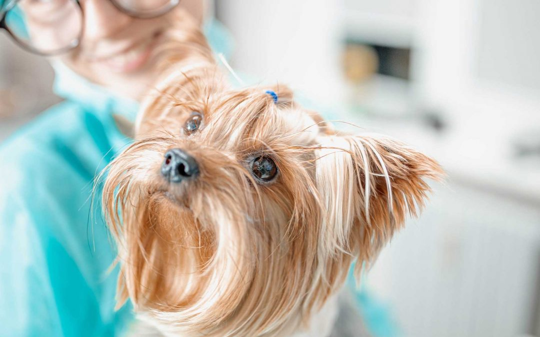How Long Does CBD Stay in a Pet's System?