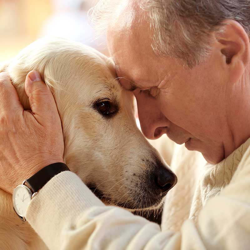 CBD for Senior and Disabled Dogs