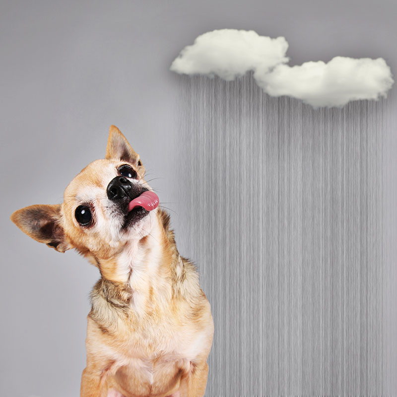Why are Dogs Scared of Thunder?