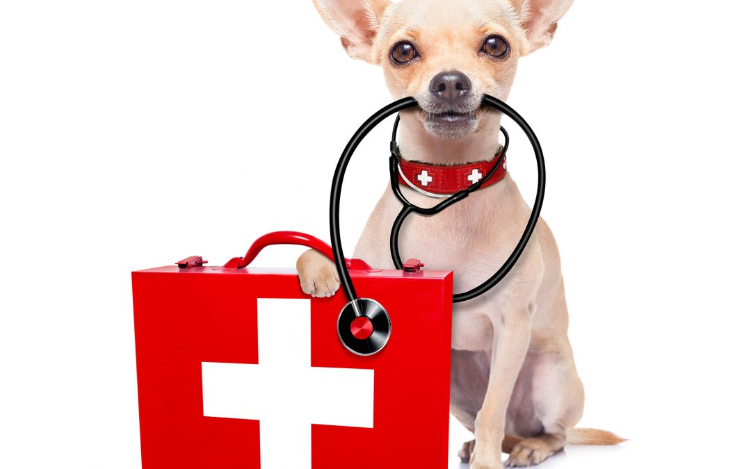 How to Make a Dog First Aid Kit